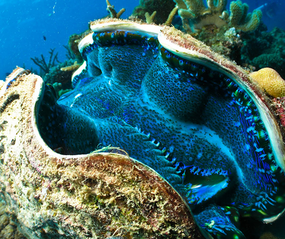 amami-coral-garden-1