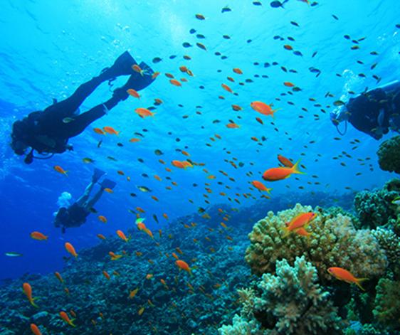 amami-diving